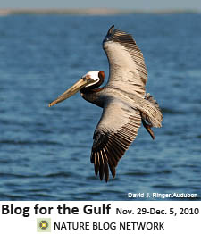 Nature Blog Network's Blog for the Gulf