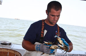 Louisiana crabber looks for keepers