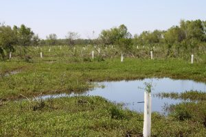 CRCL Tree Plant - Restore the Mississippi River Delta