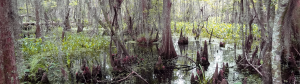 Media & Resources, Restore the Mississippi River Delta Coalition