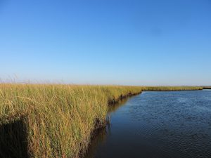 About Us - Restore the Mississippi River Delta