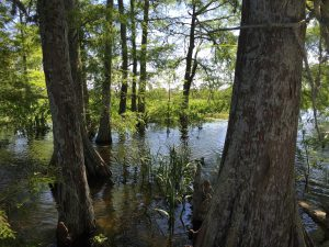 What we do - Restore the Mississippi River Delta
