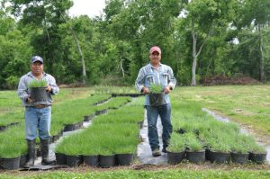 Restoration Projects - Restore the Mississippi River Delta