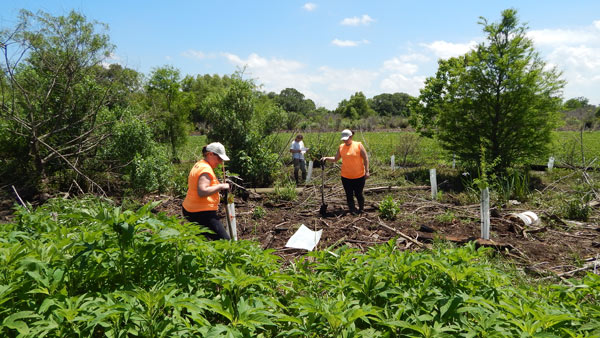 Volunteers Ridge Restoration - Restore the Mississippi River Delta