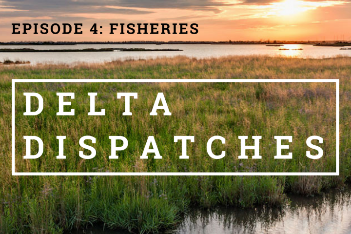 Delta Dispatches Podcast – Fisheries