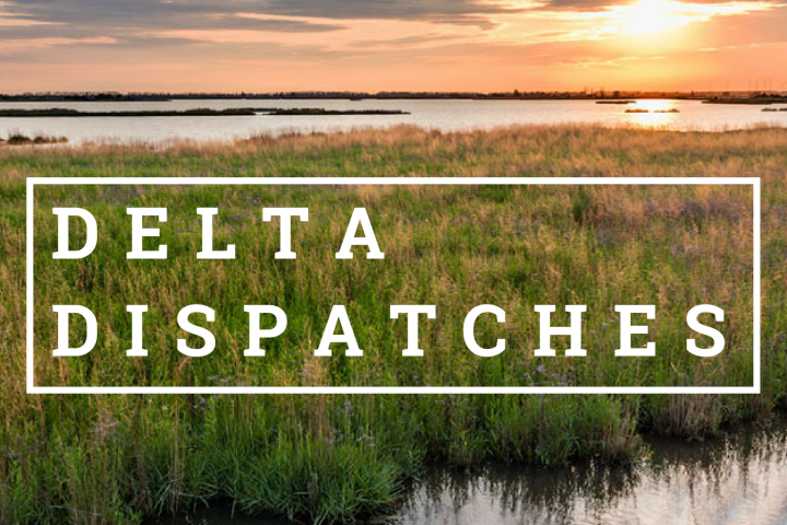 Delta Dispatches – Journalism Spotlight: Reporting The Drowning Coast