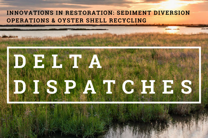 Delta Dispatches: Innovations in Restoration