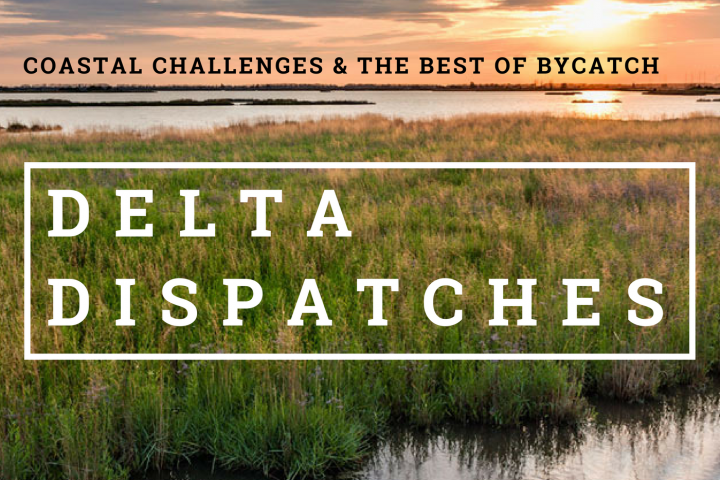 Delta Dispatches: Coastal Challenges & the Best of Bycatch
