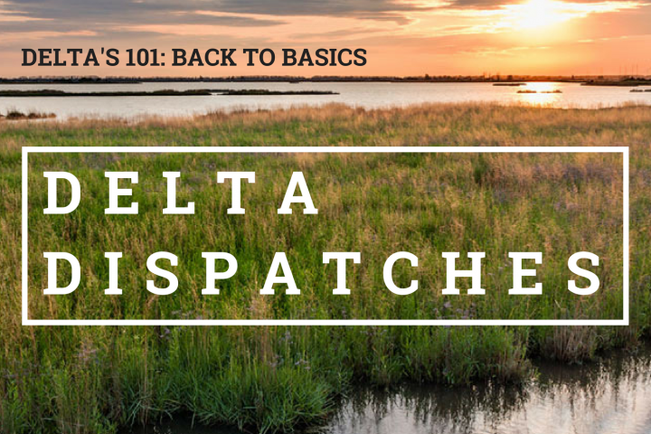 Delta Dispatches: Deltas 101 – Back to Basics