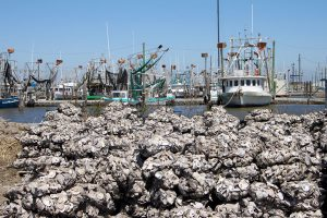 Oysters - Restore the Mississippi River Delta