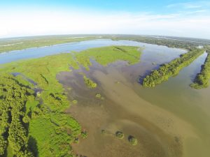 Aerial picture of the Caernarvon Freshwater Diversion outfall canal (on the right) and the delta built by the diversion in Big Mar Pond. The photo was taken on July 17, 2014. Note the lush, green vegetation on the newly built delta includes wetland grasses and black willow trees. All of these plants colonized on their own, once the diversion built the land.