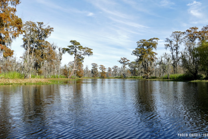 114 community leaders ask the Corps to make a win-win decision for a threatened swamp