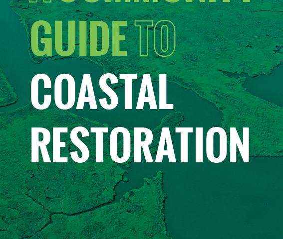 Knowledge is Power: Introducing a New Guide to Coastal Restoration!